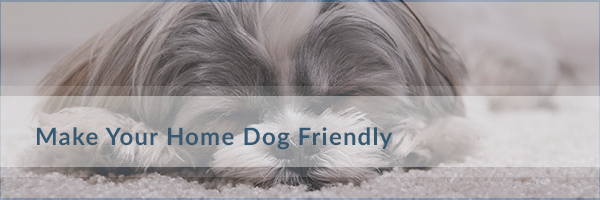Dog-Friendly-Oakville
