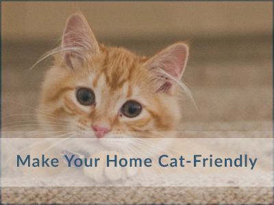 Make-Cat-Friendly-Oakville