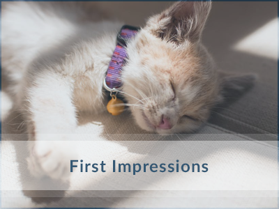 Cat-Training-First-Impressions