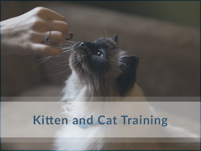 Cat-Training-Oakville