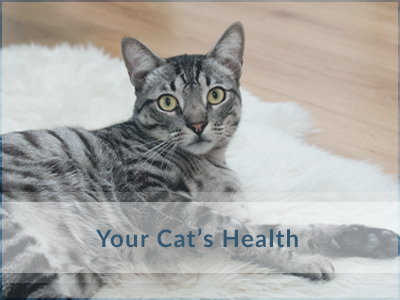 Cat-Health-Oakville