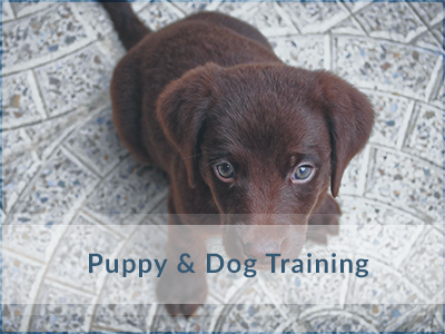 Dog-Training-Oakville