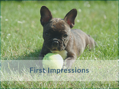 Puppy-Training-First-Impressions