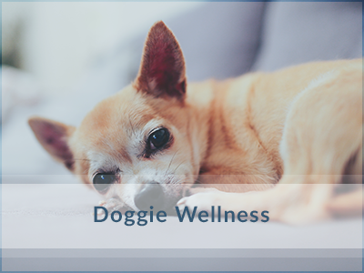 Dog-Wellness-Vet