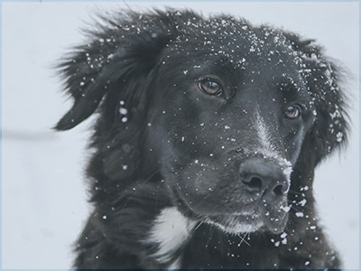 snow, winter, dog, weather, vet, pet care